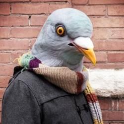 Masque en latex tête de pigeon