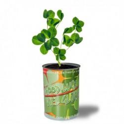 Canette avec plante trèfle à 4 feuilles