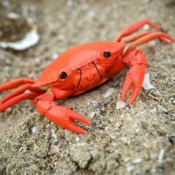 Crabe radiocommandé