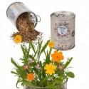 Boîte de conserve graines de fleurs des prés à planter