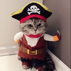 Costume pour chat pirate