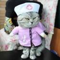 Costume pour chat infirmière