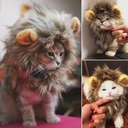 Cagoule crinière de lion pour chat
