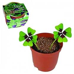 Pot de trèfle à 4 feuilles porte-bonheur