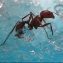 Antworks à LED milieu naturel pour les fourmis